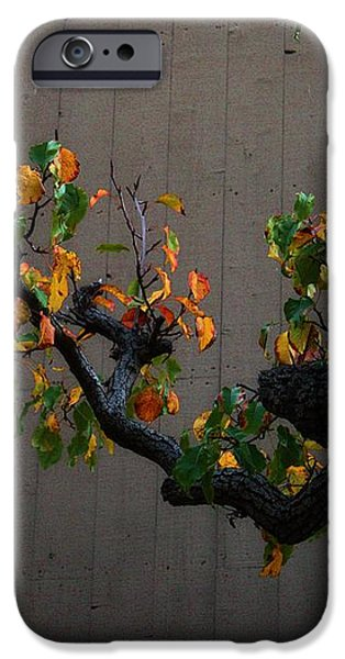 Bouquet from Autumn Leaves.Three. iPhone Case by Viktor Savchenko