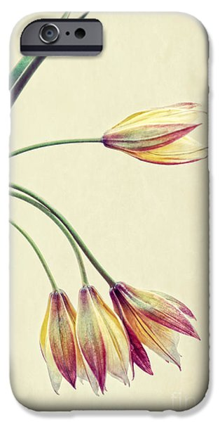 Close Up Floral iPhone Cases - Bouquet iPhone Case by HD Connelly