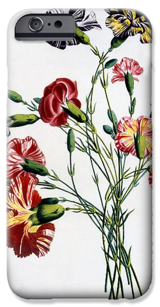 Still Life iPhone Cases - Bouquet of Carnations iPhone Case by Jean-Louis Prevost
