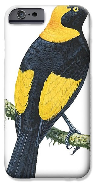 Animal Drawings iPhone Cases - Bowerbird  iPhone Case by Anonymous