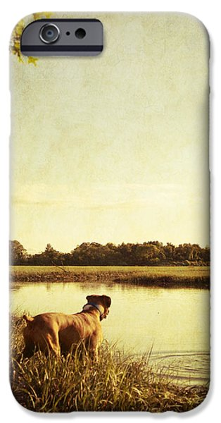 Boxer iPhone Cases - Boxer Dog by the Pond at Sunset iPhone Case by Stephanie McDowell
