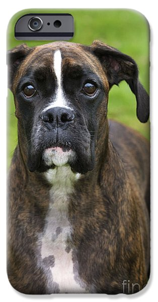 Boxer iPhone Cases - Boxer Dog iPhone Case by Johan De Meester