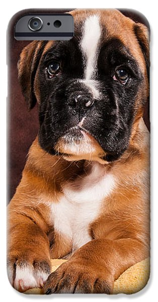 Boxer dog puppy iPhone Case by Doreen Zorn