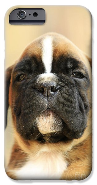 Boxer iPhone Cases - Cool puppy boxer dog iPhone Case by Dan Radi
