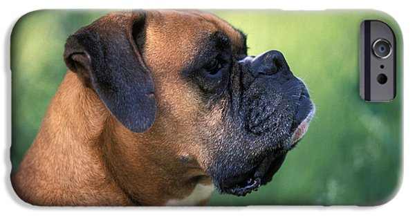 Dog Close-up iPhone Cases - Boxer Head iPhone Case by Rolf Kopfle