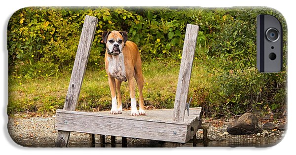Boxer iPhone Cases - Boxer on Lake Dock iPhone Case by Stephanie McDowell