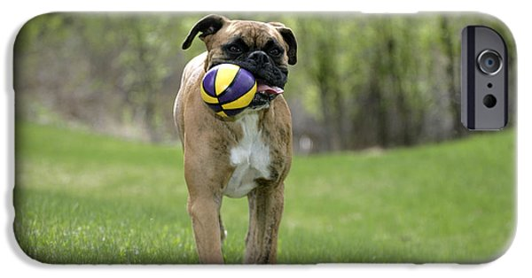 Dog Playing Ball iPhone Cases - Boxer Playing With Ball iPhone Case by Rolf Kopfle