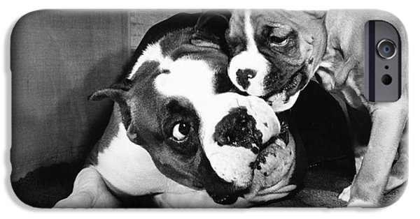Animal Portraiture iPhone Cases - Boxer Playing with Puppy iPhone Case by ME Browning