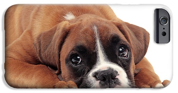 Dog Close-up iPhone Cases - Boxer Puppy Dog iPhone Case by Jean-Michel Labat