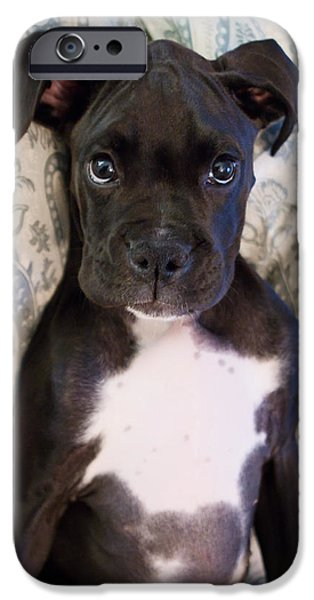 Puppy Lover iPhone Cases - Boxer Puppy Laying in Bed iPhone Case by Stephanie McDowell