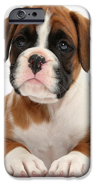 Boxer Puppy iPhone Case by Mark Taylor