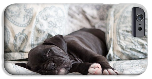 Puppy Lover iPhone Cases - Boxer Puppy Sleeping iPhone Case by Stephanie McDowell