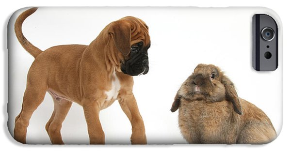 Boxer Puppy iPhone Cases - Boxer Puppy With Lionhead-lop Rabbit iPhone Case by Mark Taylor