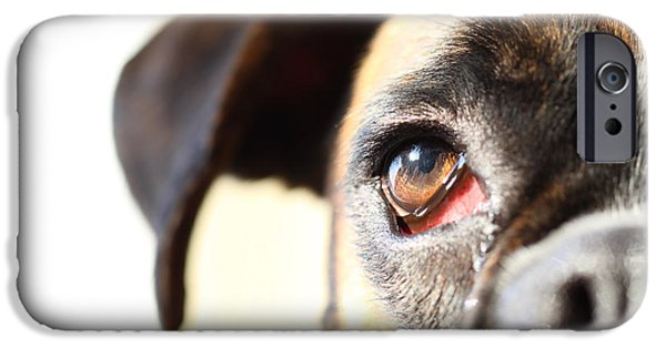 Boxer iPhone Cases - Boxers eye iPhone Case by Jana Behr