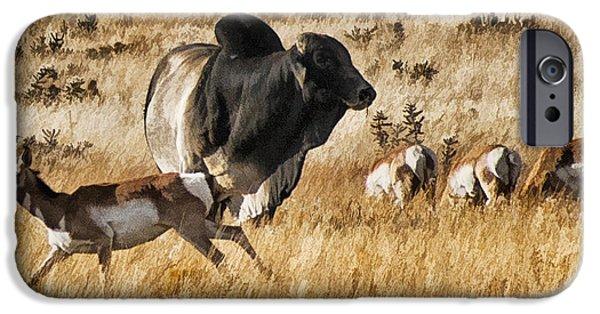 Prescott iPhone Cases - Brahma Bull Meets the Pronghorn iPhone Case by Priscilla Burgers