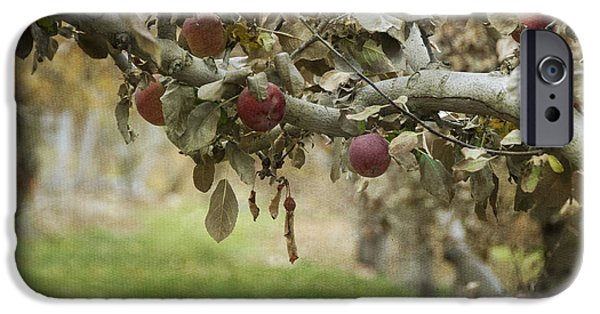 Agriculture iPhone Cases - Branch of an Apple Tree iPhone Case by Juli Scalzi