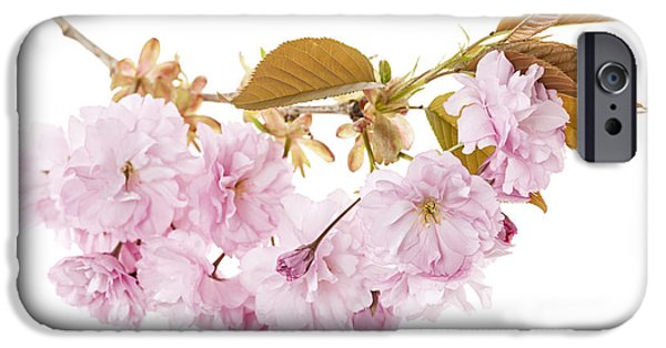 Cherry Blossoms Photographs iPhone Cases - Branch with cherry blossoms iPhone Case by Elena Elisseeva