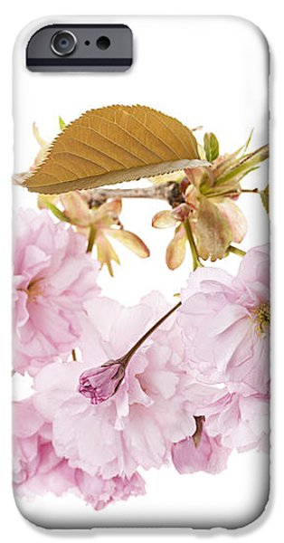 Branch with cherry blossoms iPhone Case by Elena Elisseeva