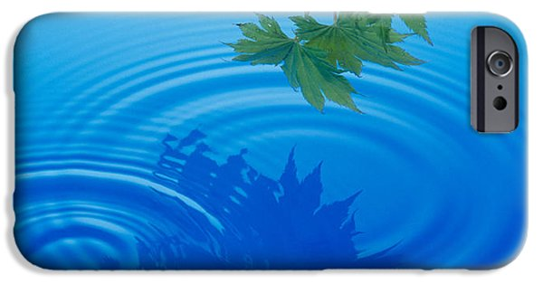 Deep Blue iPhone Cases - Branch With Green Leaves Suspended iPhone Case by Panoramic Images