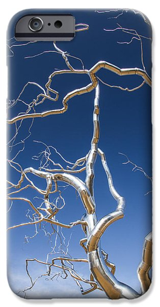Arkansas iPhone Cases - Branches of Silver iPhone Case by Steven Bateson