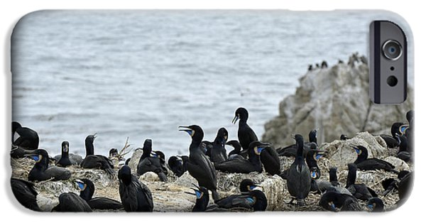 Point Lobos State iPhone Cases - Brandts Cormorant Colony at Point Lobos State Natural Reserve iPhone Case by Bruce Gourley