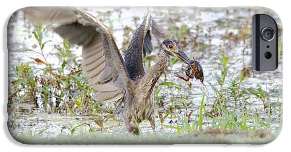 Flight iPhone Cases - Breakfast At The Pond 2 iPhone Case by Roy Williams