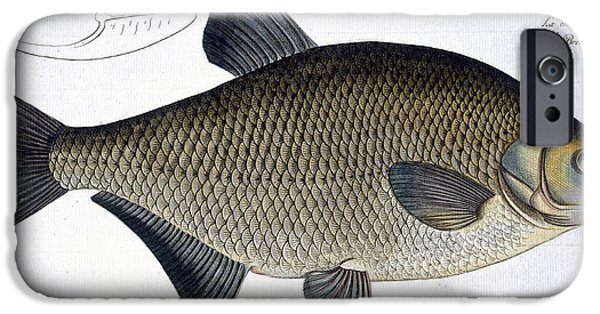 Hunting Drawings iPhone Cases - Bream iPhone Case by Andreas Ludwig Kruger