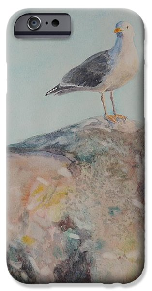 Herring Gull iPhone Cases - Brenton Point Herring Seagull 3 Newport RI  iPhone Case by Patty Kay Hall