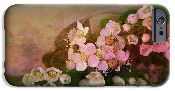 Bridalwreath Spirea iPhone Cases - Bridal Memories iPhone Case by Shirley Sirois