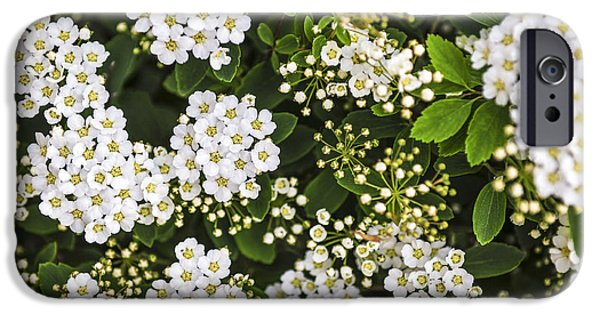 Wreath iPhone Cases - Bridal wreath flowers iPhone Case by Elena Elisseeva