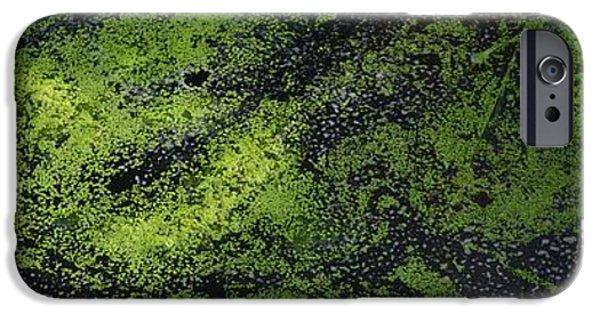 Alga iPhone Cases - Bridge Over The Algae 3  iPhone Case by Lyle Crump