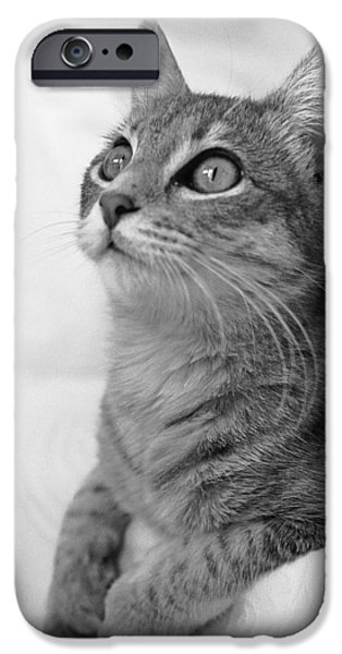 American Shorthair iPhone Cases - Bright Eyes iPhone Case by Bill Caldwell -        ABeautifulSky Photography