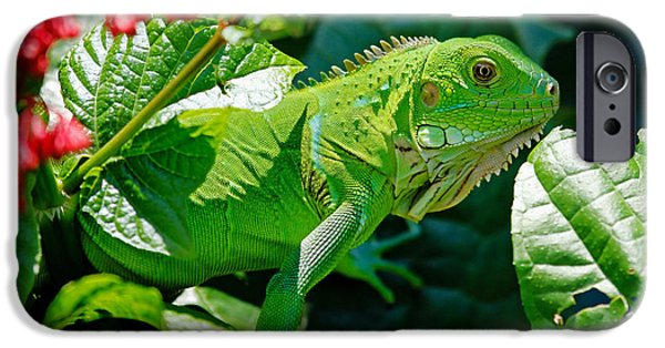 Iguana iPhone Cases - Bright Green Iguana iPhone Case by Mountain Dreams