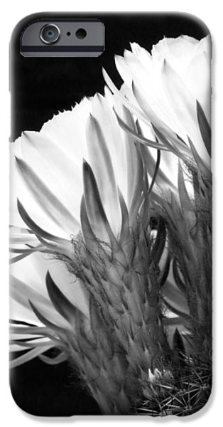 Brilliant Blossoms Diptych Left iPhone Case by Kelley King
