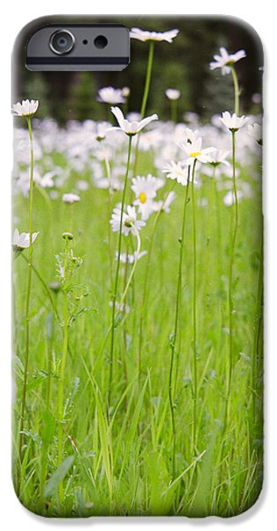 Brilliant Daisies iPhone Case by Aaron Aldrich