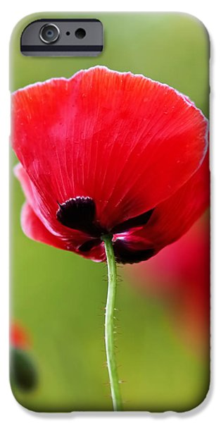 Poppies iPhone Cases - Brilliant Red Poppy Flower iPhone Case by Rona Black