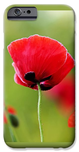Botanical Photographs iPhone Cases - Brilliant Red Poppy Flower iPhone Case by Rona Black