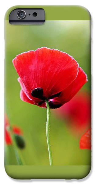 Floral iPhone Cases - Brilliant Red Poppy Flower iPhone Case by Rona Black