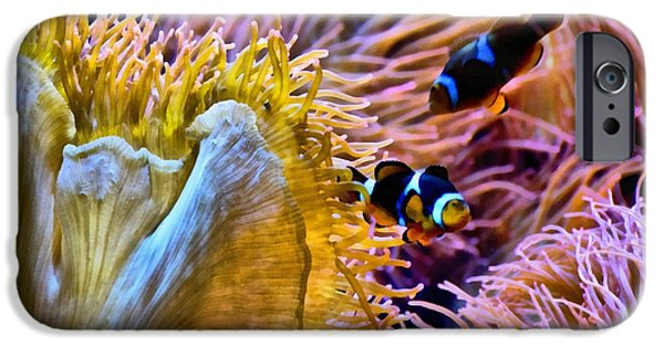 Clown Fish Photographs iPhone Cases - Bring Out The Clowns iPhone Case by Angelina Vick
