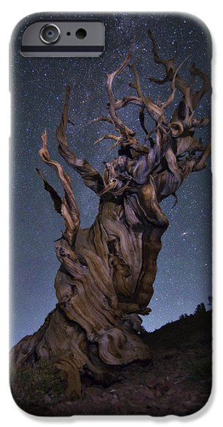 Peter Coskun iPhone Cases - Bristlecone Ballet iPhone Case by Peter Coskun