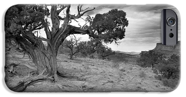Cslanec iPhone Cases - Bristlecone Pine Canyonlands Utah iPhone Case by Christian Slanec