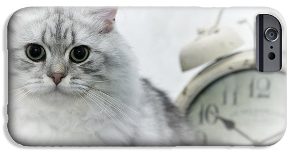 Young Digital Art iPhone Cases - British Longhair Cat Time Goes By iPhone Case by Melanie Viola