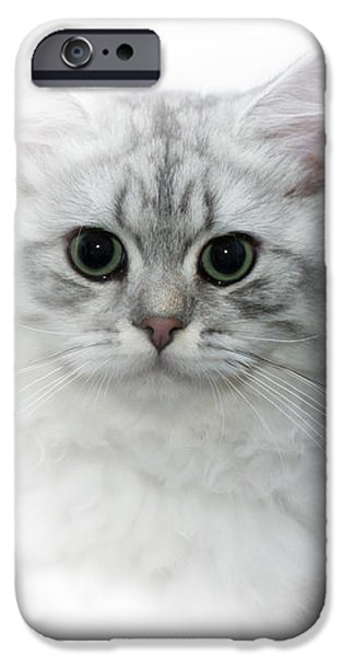 Breed Digital Art iPhone Cases - British Longhair Cat Time Goes By iPhone Case by Melanie Viola