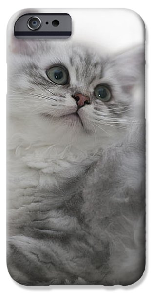 Familiar iPhone Cases - British Longhair Kitten iPhone Case by Melanie Viola