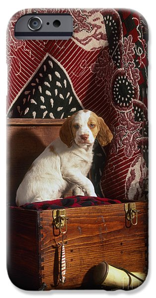 Hurricane Lamp iPhone Cases - Brittany Pup - FS000048 iPhone Case by Daniel Dempster