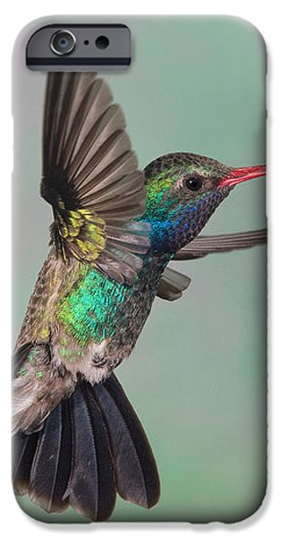Broad-billed Hummingbird iPhone Case by Jim Zipp