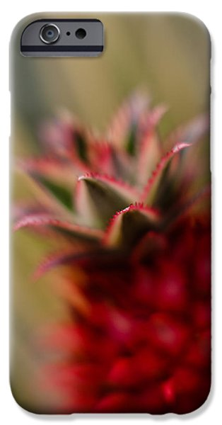 Bromeliad iPhone Cases - Bromeliad Crown iPhone Case by Mike Reid