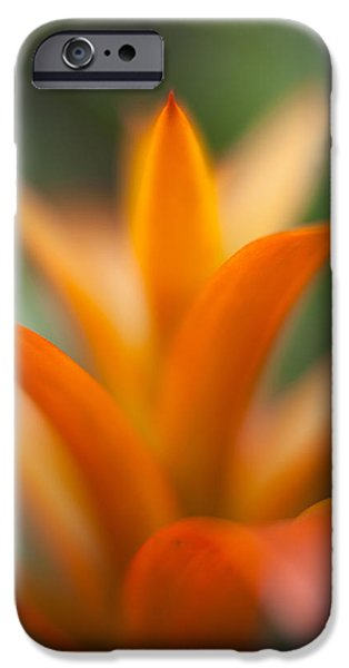 Bromeliad iPhone Cases - Bromeliad Flow iPhone Case by Mike Reid