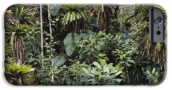 Bromeliad iPhone Cases - Bromeliads In Colombia iPhone Case by Art Wolfe