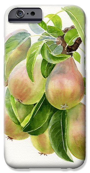 Pear Tree Paintings iPhone Cases - Bronze Pears with white background iPhone Case by Sharon Freeman